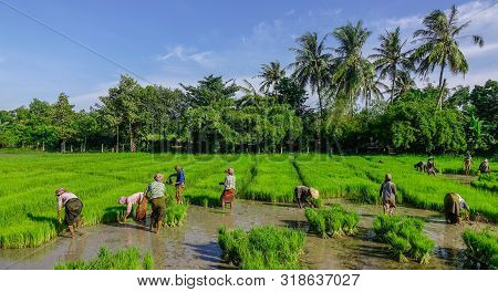 People Working On Rice Field In Vietnam