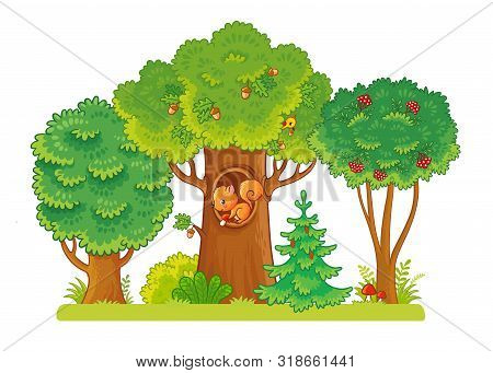 Three Trees On A Glade With Berries And Acorns. A Squirrel Sits In A Hollow. Trees On A White Backgr