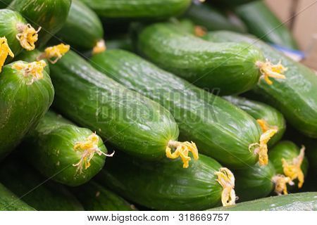 Showcase With Cucumbers In A Supermarket. A Lot Of Green Cucumbers. The Choice Of Products. Vegetabl