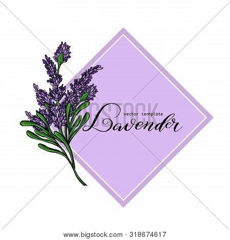 Lavender Card With Flowers. Vintage Label With Provence Violet Lavender. Vector Illustration.