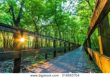 Sunrise On A Hiking Tail Natchez Trace Parkway, Tupelo, Mississippi. The Natchez Trace, Also Known A