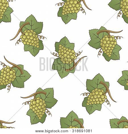 White Grapes With Leaves Colored Illustration Seamless Pattern Background With Engraving Shading.