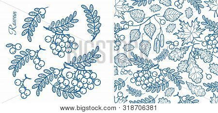 Rowan, Ash, Mountain Ash With Ashberry.leaves Of Mountain-ash Berries In The Stained Illustration. F