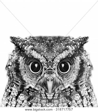 Photo Of An Owl In Macro Photography, High Resolution Photo Of Owl Cub. The Bureaucratic Owl, Also C