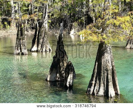 This Natural Florida Spring Surrounded By Cypress Trees At Morrison Springs County Park Is A Popular
