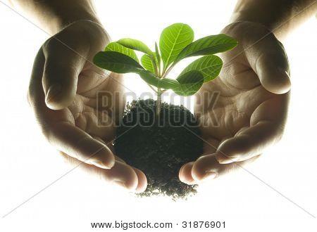 Hände und Pflanze isoliert auf weißem Hintergrund
