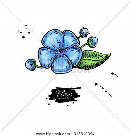 Flax Flower Vector Superfood Drawing. Isolated Hand Drawn Illustration