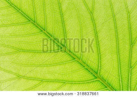 Plant Nature Background. Plant Texture For Design. Plant Background Of Leaf. Tree Leaf Plant Nature