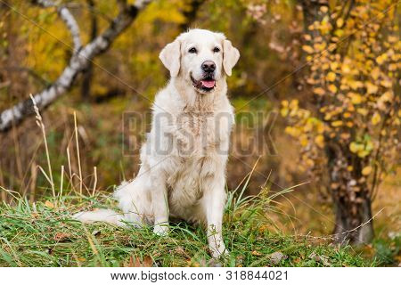 Portrait Of Dog With Foliage Bokeh Background.