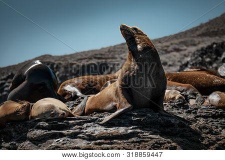 Gray Whale (eschrichtius Robustus) Surfacing At San Ignacio Lagoon In The Sea Of Cortés, Baja Califo