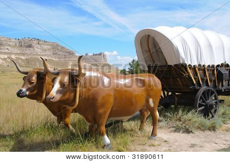oxen and covered wagon