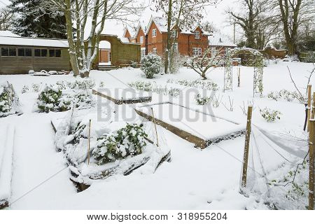 Large Vegetable Garden Covered In Snow In Winter, England Uk