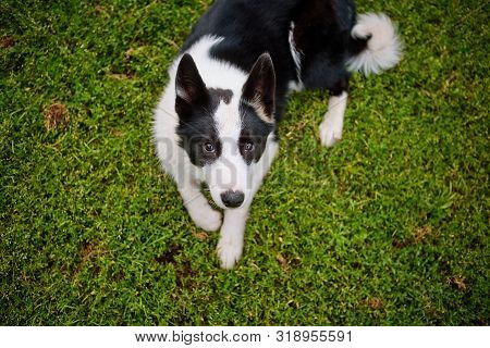 poster of black and white pooch from a dog shelter is lying on its back on the grass, playing with the owner. raising a puppy. take the puppy from the animal shelter. make a friend