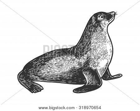 Sea Lion Seal Animal Sketch Engraving Vector Illustration. Scratch Board Style Imitation. Black And