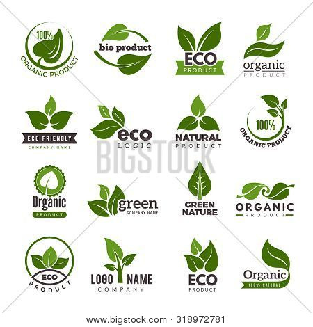 Leaf Logo. Bio Nature Green Eco Vector Symbols Business Logo Template. Illustration Of Bio Eco Green