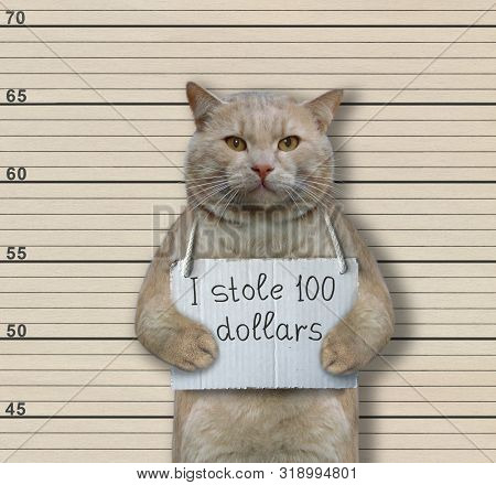 The Cat Criminal Has The Sign Around His Neck That Says