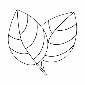 Isolated Object Of Leaf And Ginger Icon. Set Of Leaf And Plant Vector Icon For Stock.