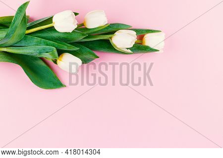 Bouquet Of White Tulips On Pink Pastel Background. Flat Lay. Closeup. Springtime. Womens And Mother'