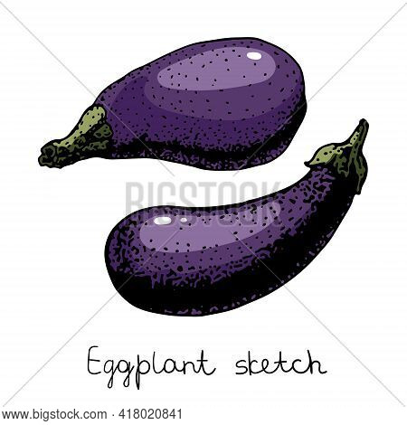 Eggplant Illustration. Vector Eggplant Illustration. Sketchy Style