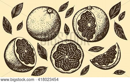Set With Graphic Retro Oranges On A Yellowed Background With Age. Vector Stylized Ink Illustration.