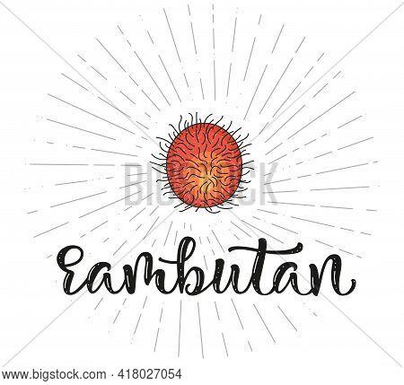 Rambutan - Fruit Symbol For Farm Market Menu, Healthy Food Design. Vector Stock Illustration And Let