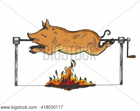 Piggy On Spit Color Sketch Engraving Vector Illustration. Scratch Board Style Imitation. Hand Drawn