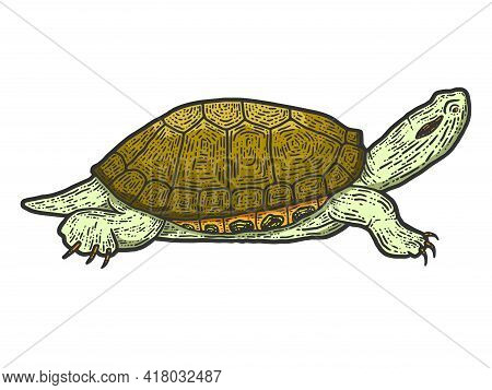 Animal Reptile Tortoise. Sketch Scratch Board Imitation Color.