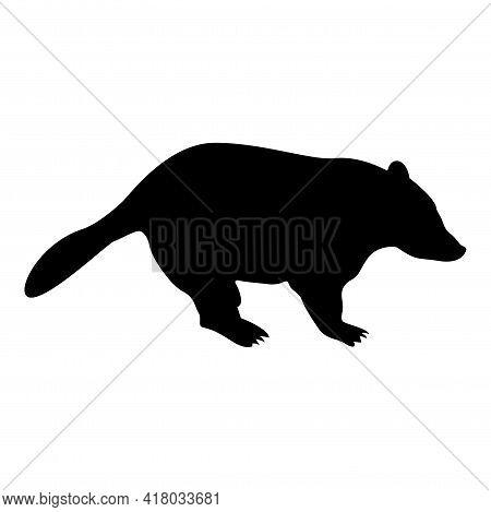 Silhouette Badger Animal Wild Meles Taxus Predatory Mammal Family Kunihih Carnivore Black Color Vect