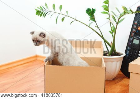Cat In A Box During Moving Day. Packed Household Stuff For Moving Into New House. Animals, Relocatio
