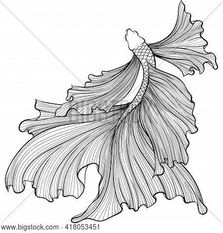 Betta Fish Or Siamese Fighter Fish Top View In Hand Drawn Line Art Style. Decorative Goldfish Veilta