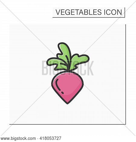 Radish Color Icon. Root Vegetable. Edible Plant. Vegetarian, Healthy Nutrition. Health Benefits. Agr