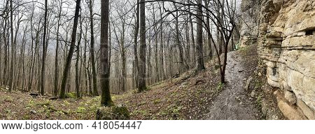 Forest Landscape In Mountainous Terrain. Close Up Of Tree Trunks On High Ground In Springtime.