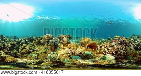 Tropical Coral Reef. Underwater Fishes And Corals. Underwater Fish Reef Marine. Philippines. Virtual