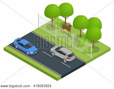 Isometric Fencing The Highway From Wild Animals. Protective Mesh On The Side Of Road From Wild Anima