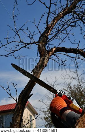 Man Cutting Rotten Tree Branches Using Electrical Chainsaw And Professional Tools. Home Backyard Imp