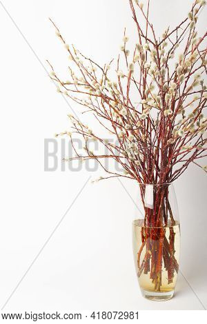 Easter Willow In A Transparent Vase On A White Background, Willow Branches In A Vase