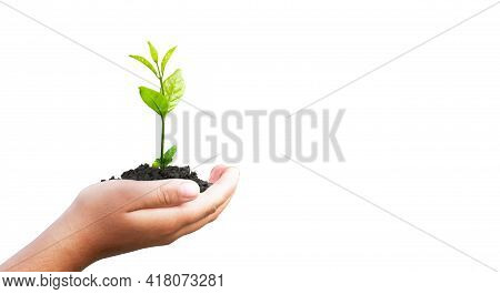 World Environment Day Concept:  Hand Holding Small Plant Isolated On White Background