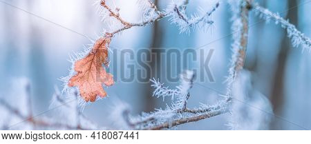 Winter Park Closeup With Yellow Leaf And First Snow, Cold Morning Seasonal Nature Banner. Artistic W