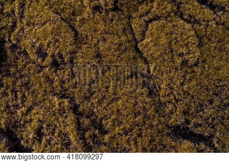Seamless Texture Mossy Bark On Tree Background.