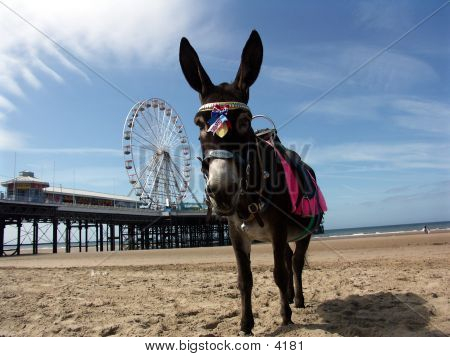 Donkey By The Pier