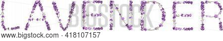Vector Inscription Lavender Made In The Form Of Lavender Sprigs In Bright Colors On A White Backgrou