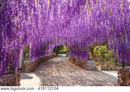 Chaing Rai, Thailand - March 5 ,2021 : View Of Wisteria Flower Tunnel In Cherntawan International Me