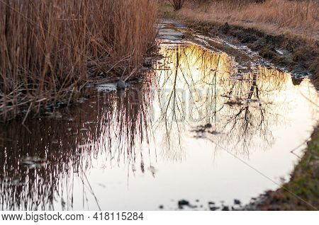 Reflection Of The Sun In A Puddle. Beautiful Reflection Of The Sunset In The Water. Thickets Of Reed