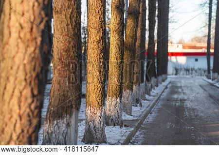 Beautiful Sunny Winter Landscape Of Trees. Winter Nature Background. Сountry Road In The Snow