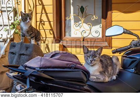 Two Street Cats With Different Kind Of Temperaments. Lazy One (right Side) Is Laying On Motorcycle S