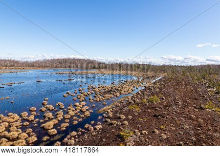 Springy, Squishy, Damp Freshwater Lake Layered With A Mesh Of Moss In A Latvian Peat Bog. View From