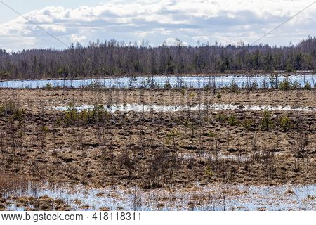 Sunny Bright Day At Wet Peat Bog In Latvia. View From Up To Damp Earth Of Brown Mesh Of Spongy Moss