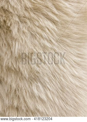 Cream Colored Sheep Wool Skin Rug - Background Or Texture.