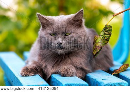 Gray Fluffy Cat Resting In The Garden On A Bench