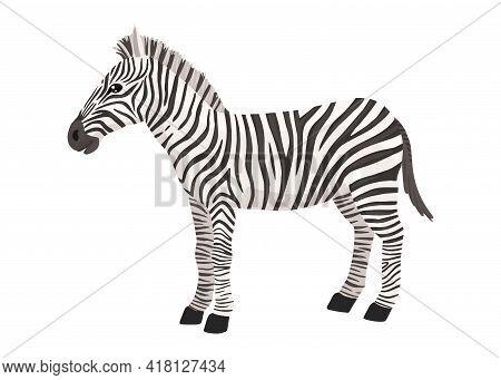 Zebra, Striped Horse, African Savannah Animal, Striped Hide. Wild Animal, Cute Character, Cartoon Ve